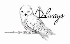 Ausmalbilder Eule Hedwig Harry Potter Motive Zum Nachmalen