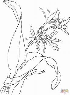 orquidea de venezuela para colorear dibujo de orqu 237 dea laeliocattleya rojo para colorear dibujos para colorear imprimir gratis