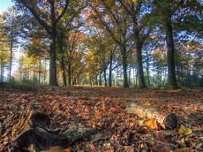 Gambar Pemandangan Pohon Hutan Menanam Sinar