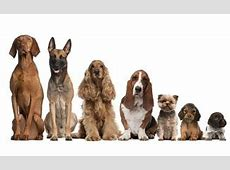 Dog Breed List: We've Got Them All   CanineJournal.com