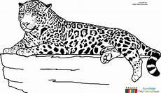ausmalbilder jaguar tier basteln