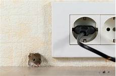 Maus Im Haus Fangen - wie fange ich eine maus