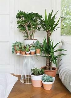 pflanzen fürs schlafzimmer feng shui feng shui schlafzimmer einrichtung nach den feng shui regeln