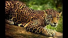 191 qu 233 significa so 241 ar con jaguar sue 241 o significado youtube