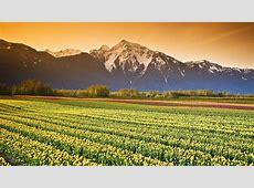 Field Desktop Wallpaper 17324   Baltana