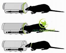 Rattenbekämpfung Ohne Gift - nooski rattenfalle gegen ratten sch 228 dlingsbek 228 mpfung ohne gift