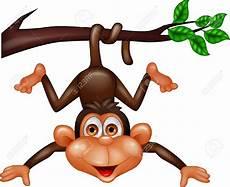 Gambar Gerak Kartun Monyet Bestkartun