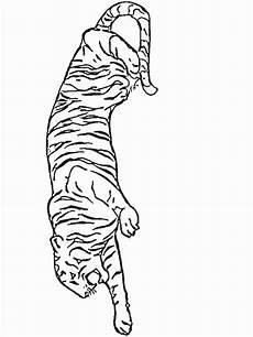 Malvorlagen Tiger Motor N Coloring Page Tigers Tigers