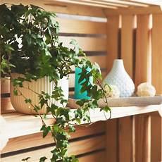 efeu zimmerpflanze pflege efeu pflege tipps f 252 r eine pr 228 chtige zimmerpflanze