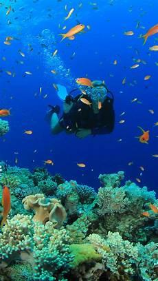 scuba diving wallpaper 59 images