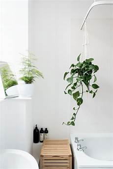 plante verte pour salle de bain plante pour salle de bain laquelle choisir obsigen
