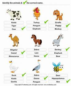 worksheets on animals for grade 1 14265 learning farm animals worksheet turtle diary