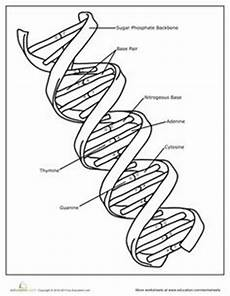 1000 images about bio unit 7 dna rna pinterest dna transcription and biology