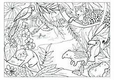 Ausmalbilder Regenwald Tiere Pin Doris S Auf Regenwald Regenwald Tiere