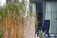 gräser im garten als sichtschutz ziergras im garten gestaltung mit gr 228 sern arten