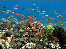 Tentang Pesisir Indonesia Manfaat Wilayah Laut Indonesia