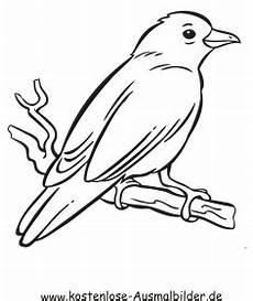 ausmalbild kanarienvogel zum ausdrucken