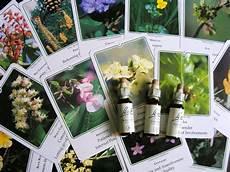 38 fiori di bach las 38 flores de bach
