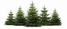 tannenbaum setzlinge kaufen