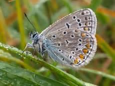 insekt an fauligem obst aktuelles insektengitter wir liefern 246 sterreichweit
