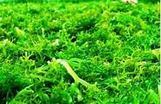 Harga Rumput Laut Basah Dan Rumput Laut Kering Per Kilo