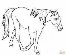 Malvorlage Pferd Palomino Coloring Pages And Print For Free