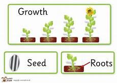 plants lesson ks1 13726 s pet displays 187 plant growth key word cards 187 free downloadable eyfs ks1 ks2