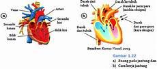 Organ Peredaran Darah Cita Dan Cinta