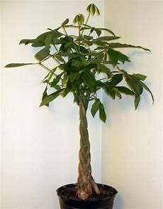 serpenti da tenere in casa piante portafortuna le migliori da regalare e tenere in
