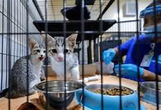 Denda Rm568 Jika Beri Makan Kucing Jalanan Di Dubai Edisi 9
