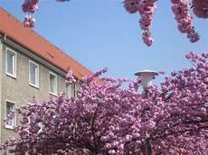Die Schönsten Gartenbäume - bielefelder b 228 ume 187 archive 187 kirschbaumallee auf dem