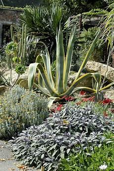 Les Plantes Grasses Au Jardin Gamm Vert