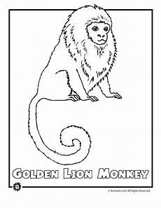 rainforest animals coloring pages preschool 17131 endangered rainforest monke woo jr activities