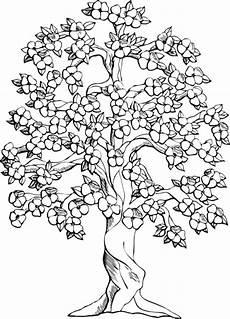 araguaney dibujo para colorear arbol araguaney para colorear imagui