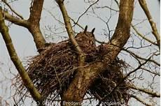 welcher vogel baut welches nest uhu brutpl 228 tze bodenbruten baumbruten dachbruten