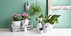 foto vasi vasi alti eleganti recipienti per i vostri fiori dalani