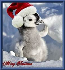 wiinterrr s day merry christmas from penguin news today