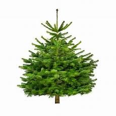 weihnachtsbaum online bio weihnachtsbaum quot der schicke maxim quot 125 150cm bio