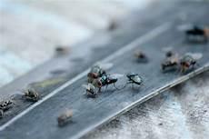 chasser les mouches quelques moyens naturels pour repousser les mouches page 2