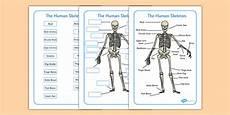 free human skeleton labelling sheet teacher made