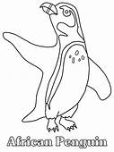 Penguins 12 Animals Coloring Pages Page & Book