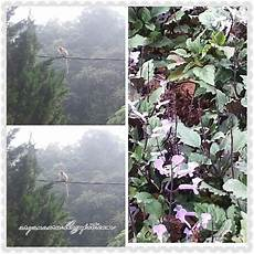 Gambar Burung Suradi Gambar V