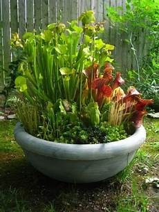 outdoor bog container garden another great way to add