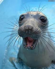Malvorlagen Unterwasser Tiere Lustig Look At That D Gl 252 Ckliche Tiere S 252 223 E Baby Tiere