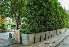 Sichtschutz Aus K 252 Beln 187 So Bauen Sie Eine Wand Aus Pflanzen