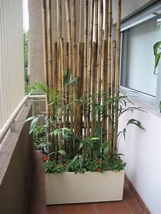 Balkon Sichtschutz Mit Pflanzen Natur Pur Auf Dem Balkon