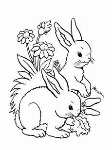 baby woodland animals coloring pages 17514 woodland baby animals coloring pages coloring pages