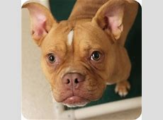 Nellie   Adopted Dog   13 0522   Naperville, IL   French