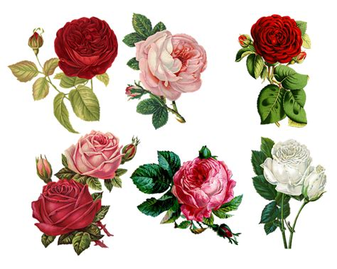 Roses Collage Vintage · Free Image On Pixabay