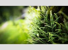 nature, Ferns, Blurred, Depth Of Field, Plants Wallpapers